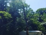 McAbee Tree Care Projects