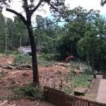 tree removal blue ridge in fannin county